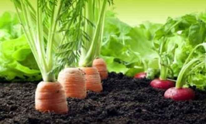 छत पर फल, सब्जियों और औषधीय पौधों की खेती