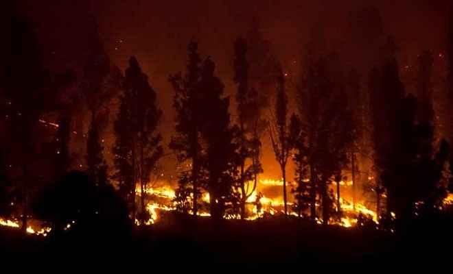 कैलिफोर्निया के जंगलों में लगी आग से अब तक 31 मरे