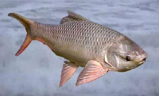 मछली मारने के विवाद में दो पक्षों में मारपीट, कई लोग घायल