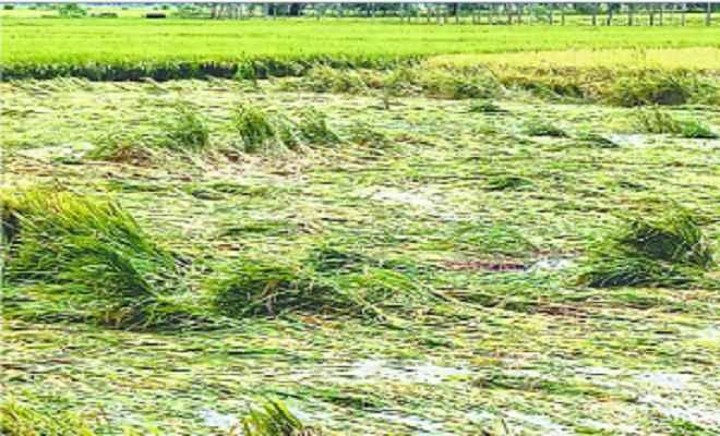 बारिश से धान की फसल को काफी नुकसान, जनजीवन अस्त-व्यस्त