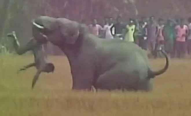 हाथी ने ली किसान की जान