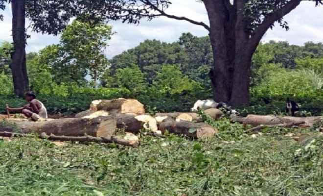 विभागीय कर्मियों व दलालों की मिलीभगत से खुलेआम कट रहे जंगल