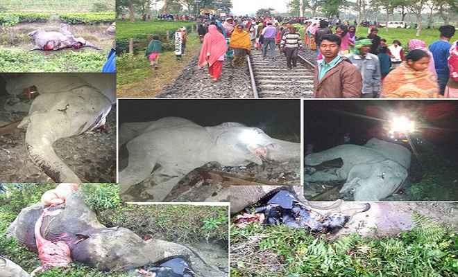 ट्रेन से कटकर छह जंगली हाथियों की मौत