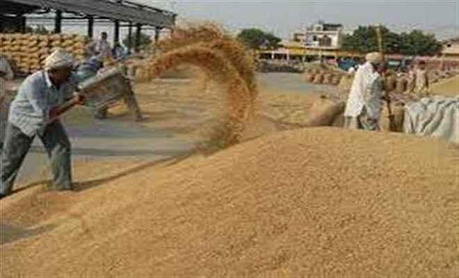 जगदीशपुर पैक्स में एक माह विलम्ब से शुरू हुई धान की खरीद