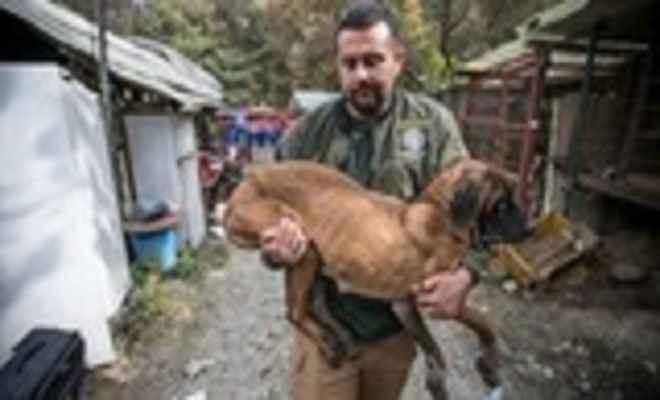 चीन और द. कोरिया में कुत्तों का मांस परोसे जाने पर हो रही आपत्ति, जनजागरण अभियान भी