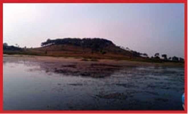 पतौड़ा झील में जलीय पक्षियों की संख्या बढ़ी