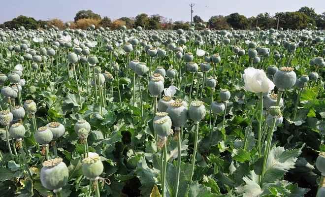 अफीम की खेती का सेफ जोन बन गया है खूंटी