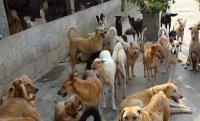 'भारत में कुत्तों की हालत आज जितनी बुरी कभी नहीं रही'