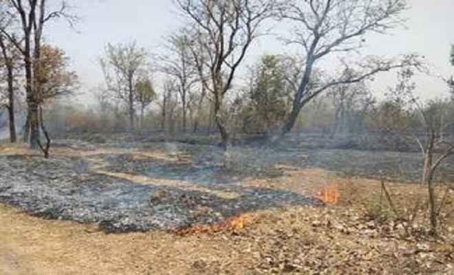 एनएच तक पहुंची जंगलों में लगी आग