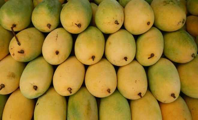 ऑस्ट्रेलियाई चखेंगे भारतीय आमों का स्वाद