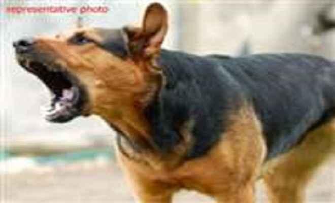 आवारा कुत्तों के हमले से हिरण की मौत