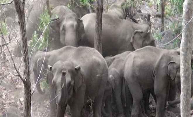 दो दिनों में हाथी के कुचलने से दम्पति की मौत