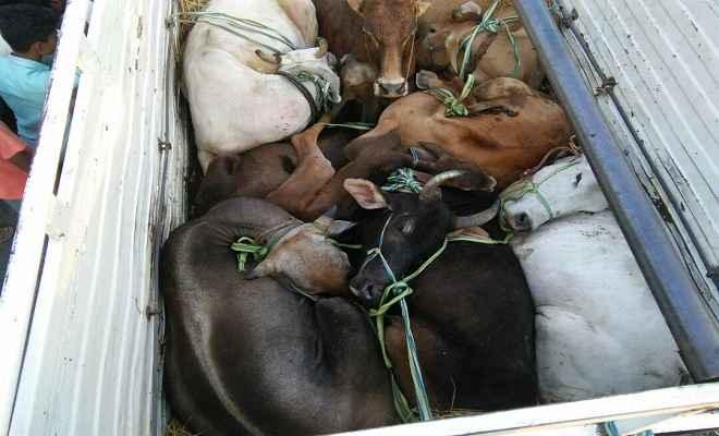 पशु लदे तीन वाहन कोडरमा में जब्त, तीन हिरासत में