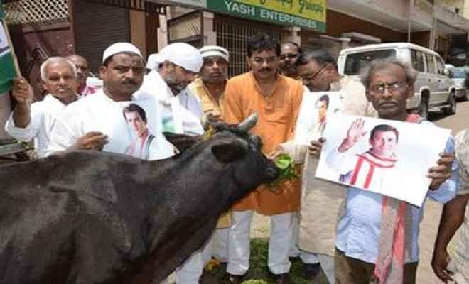 राहुल गांधी के जन्मदिन पर कांग्रेसियों ने गायों की आरती उतार उनका पूजन किया