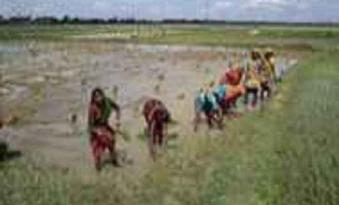 भरपूर बारिश से किसानों की बांछें खिली