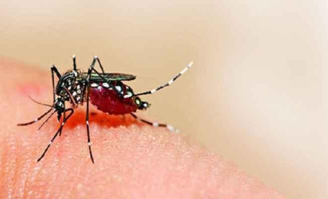 डेंगू के संक्रमण से सैकड़ों ग्रस्त