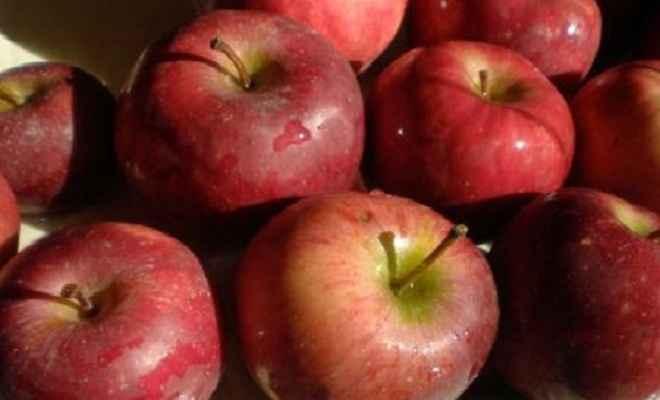 हिमाचल सरकार ने सेब के समर्थन मूल्य में की मामूली बढ़ोतरी