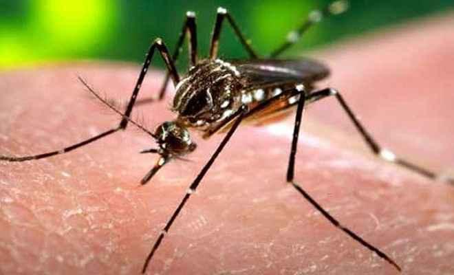 बरहरवा में डेंगू का कहर