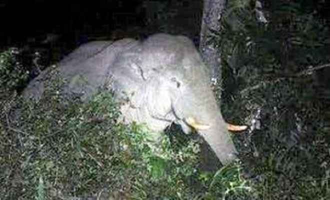 जंगली हाथियों का उत्पात, चट किया धान, तोड़े मकान, एक घायल