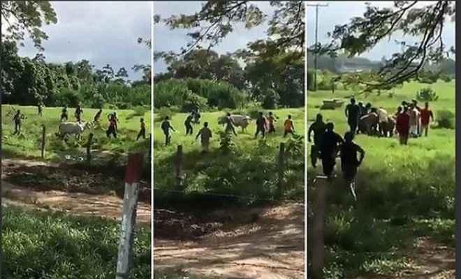 वेनेजुएला में भूखे लोगों ने पत्थरों से मार कर ली गाय की जान