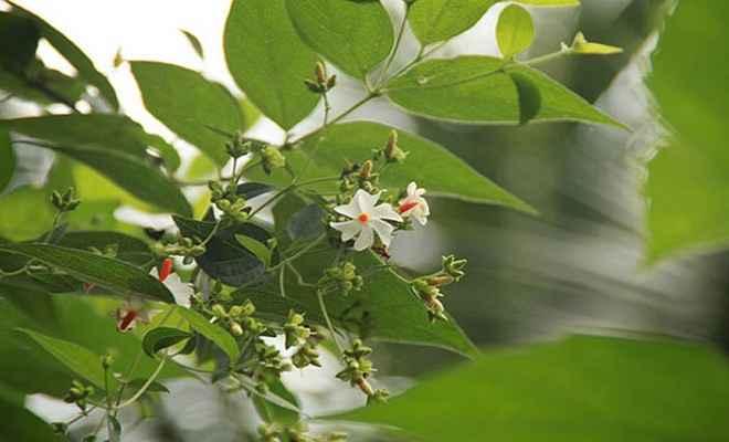 बवासीर का रामबाण इलाज है ये प्राकृतिक उपचार