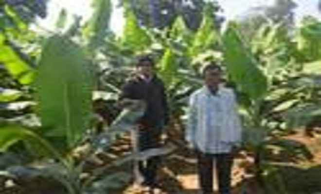 केले की खेती से बढ़ी किसानों की उम्मीदें