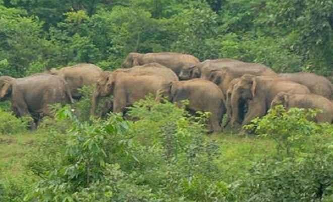 नदी के किनारे जंगली हाथियों के झुंड देख इलाके में फैला दहशत का माहौल