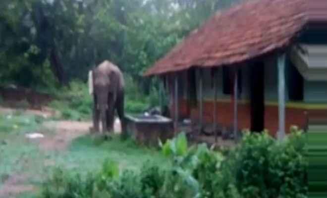 जंगली हाथियों के आने से ग्रामीणों में फैली दहशत, मची अफरातफरी