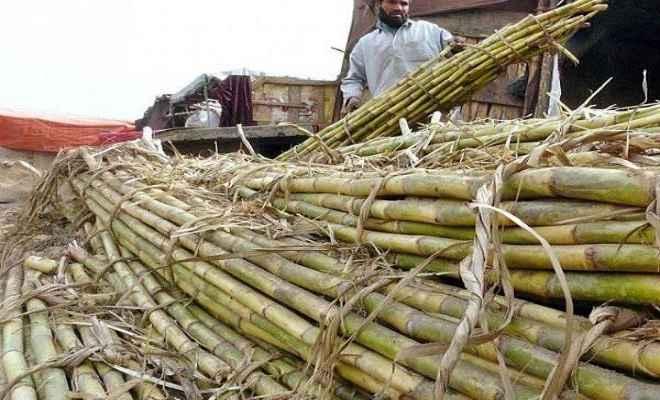 सरकार ने गन्ने की कीमत 20 रुपए प्रति क्विंटल बढ़ाई, कैबिनेट ने दी मंजूरी