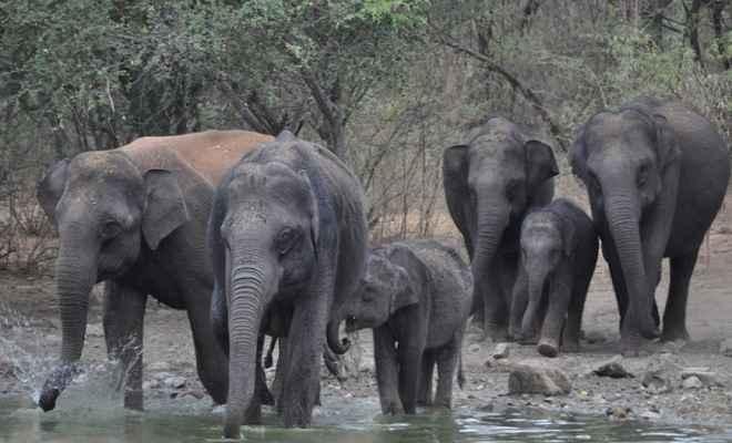 बढ़ा हाथियों का आतंक, खलिहान में गई महिला को पटक कर ली जान