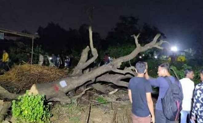 मुंबई में पेड़ काटने पर हंगामा, आरे कॉलोनी के पास धारा 144 लागू
