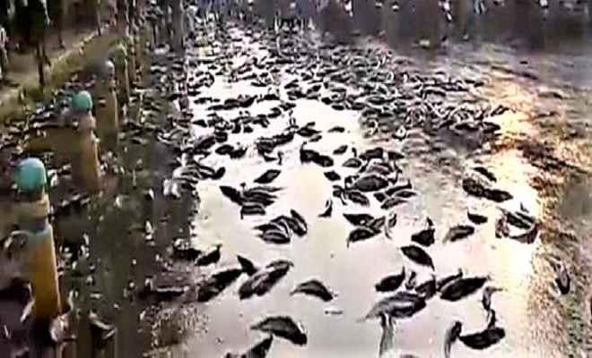 कानपुर में मछलियों से भरा ट्रक पलटा, लोगों ने दिनदहाड़े लूटीं मछलियां, पुलिस ने लाठी पटककर खदेड़ा
