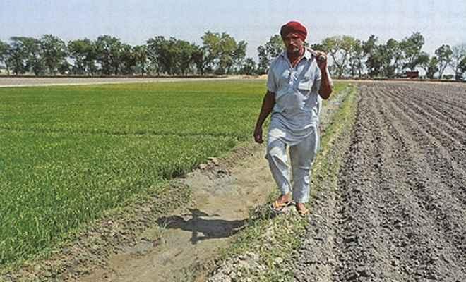 बजट 2019: 12 करोड़ किसान परिवारों के लिए बड़ा ऐलान, हर साल मिलेगी 6 हजार रुपये की सीधी मदद