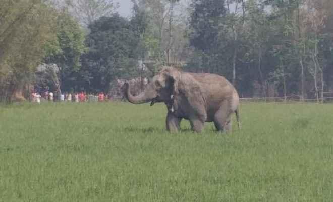 सुपौल में जंगली हाथी का कहर, तीन को पटककर ली जान, कई लोग घायल