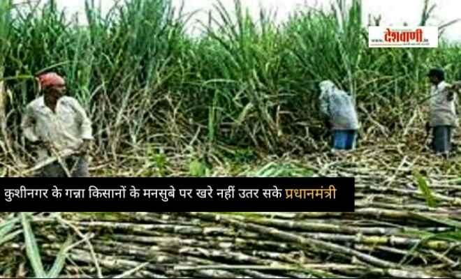 कुशीनगर के गन्ना किसानों के मनसुबे पर खरे नहीं उतर सके प्रधानमंत्री