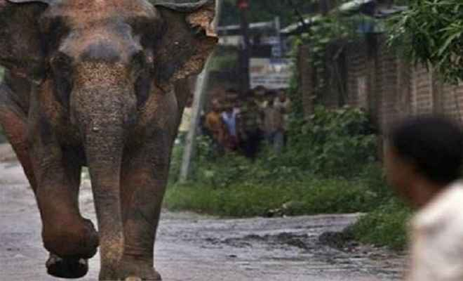 जामतारा में हाथी के कुचलने से दो की मौत, एक घायल अस्पताल में भर्ती