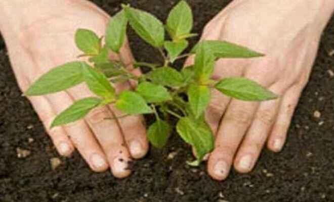 कुशीनगर में वन क्षेत्र बढ़ाने के लिये प्रदेश सरकार कर रही 22 करोड़ पौधों का रोपण