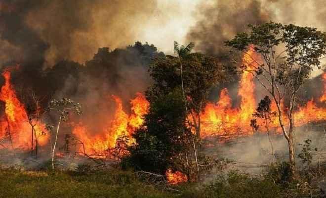 दुनिया को 20 फीसदी ऑक्सीजन देने वाले अमेजन के जंगलों में भयंकर आग, 47 हजार वर्ग किमी जंगल जलकर खाक