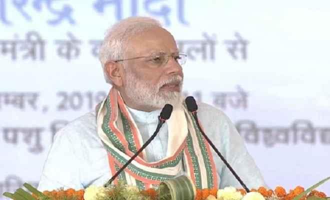 प्रधानमंत्री मोदी ने की पशु आरोग्य मेले की शुरुआत, बोले-बीते 100 दिनों में करके दिखाया अभूतपूर्व कार्य