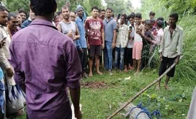 कुशीनगर में पकड़ा गया विशालकाय  मगरमच्छ, वन विभाग ने छोड़ा नारायणी नदी में