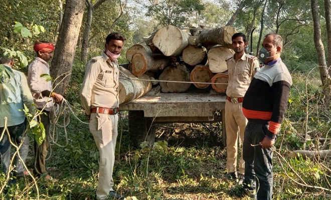 मोतिहारी के चकिया में वन विभाग ने चोरी से काटी जा रही इमारती लकड़ी को किया जब्त, डीएफओ के निर्देश पर हुई करवाई