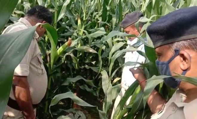 समस्तीपुर में मकई खेत से मिली वृद्ध की लाश, जहर की शीशी भी पड़ी मिली, सनसनी